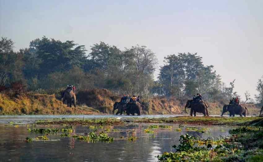chitwan-elephant-red-carpet-journey